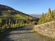 Seit über 2.000 Jahren wird an der Mosel Wein angebaut - die Vinothek und Weinhandlung wird das einzigartige Terroir der Mosel und ihre vielfältigen Weine repräsentieren
