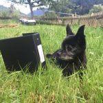 Pendelordner hütet seinen Hund